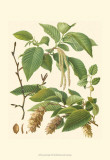 Pinecones & Foliage I Art