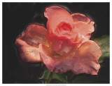 Painterly Flower IV Prints by Lola Henry