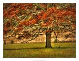 An Oak in the Cove Wydruk giclee autor Danny Head