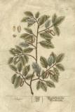 Vintage Foliage I Giclee Print
