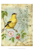 Songbird Sketchbook III Print by Jane Maday
