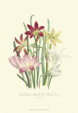 Lily Garden I Poster by Jane W. Loudon