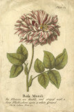Vintage Rose Giclee Print