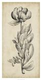 Singular Beauty IV Giclee Print
