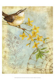 Songbird Sketchbook I Poster by Jane Maday