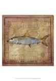 Ocean Fish IV Print
