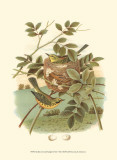 Golden Crowned Kinglet & Nest Affiches