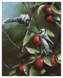 Summer Blue Jays Prints by Kevin Daniel