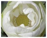 Delicate Lotus I Poster af Jim Christensen