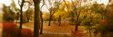 Trees in a Park, Central Park, Manhattan, New York City, New York State, USA Photographic Print