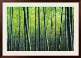 The Bamboo Grove Arte por Robert Churchill