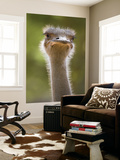 Ostrich, Lewa Wildlife Conservancy, Kenya Wall Mural by Demetrio Carrasco
