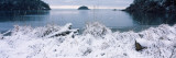 Grass Covered with Snow on the Beach, Bowman Bay, Deception Pass State Park, Washington Stampa fotografica