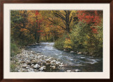 Forest Creek Prints