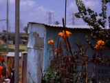Flowers with Huts in a Town, Kibera, Nairobi, Kenya Photographie