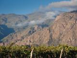 Crop in a Vineyard, Cafayate, Calchaqui Valleys, Salta Province, Argentina Photographic Print