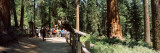 Tourists Near a Lodge in a Forest, Sequoia National Park, California, USA Photographic Print