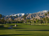 Palm Trees in a Golf Course, Desert Princess Country Club, Palm Springs, California Fotografie-Druck