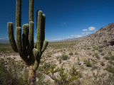 Cactus Plants in a Desert, Quilmes, Tucuman Province, Argentina Photographic Print