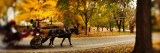 Horse Drawn Carriage in a Park, Central Park, Manhattan, New York City, New York State, USA Photographie