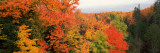 Autumnal Trees in a Forest, Hiawatha National Forest, Upper Peninsula, Michigan, USA Photographic Print