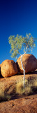 Rock Formations with Ghost Gum Tree, Devil&#39;s Marbles, Northern Territory, Australia Photographic Print