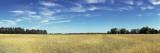 Crop in a Field, Upper Peninsula, Michigan, USA Photographic Print