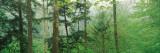 Trees in Spring Forest, Turkey Run State Park, Parke County, Indiana, USA Reprodukcja zdjęcia