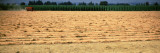 Hay Harvest in a Field, Willamette Valley, Oregon, USA Photographic Print