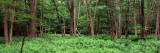 Forest, Adirondack Mountains, Old Forge, Herkimer County, New York State, USA - Fotografik Baskı