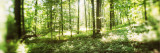 Trees in a Forest, Hudson Valley, New Jersey, USA Photographic Print