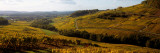 Crop in a Vineyard, Chateau Chalon, Jura, Franche-Comte, France Photographic Print