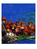 """Orangutans & Bird Nest,"" February 17, 1940 Giclee Print by Julius Moessel"