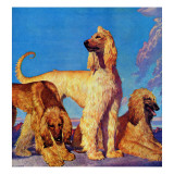 """Afghan Hounds,"" March 18, 1944 Giclee Print by Rutherford Boyd"