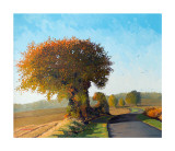 Autumn Sunlight Collectable Print by Frank Colclough