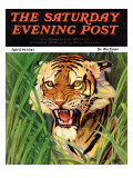 """Snarling Tiger,"" Saturday Evening Post Cover, April 19, 1941 Giclee Print by Emmett Watson"