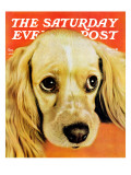 """""""Golden Cocker,"""" Saturday Evening Post Cover, November 1, 1941 Giclee Print by J.E. Reed"""