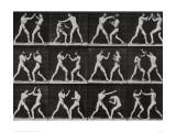 Phases in a Boxing Match Reproduction procédé giclée par Eadweard Muybridge
