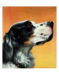 """Gordon Setter,"" October 17, 1942 Giclee Print by W.W. Calvert"