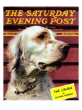 """Springer Spaniel,"" Saturday Evening Post Cover, November 16, 1940 Giclee Print by W.W. Calvert"
