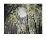 The Canopy Collectable Print by Sandra Moffat