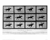 Eadweard Muybridge - Movements of a Galloping Horse Digitálně vytištěná reprodukce
