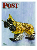 """Butch in Raingear,"" Saturday Evening Post Cover, April 2, 1949 Giclee Print by Albert Staehle"
