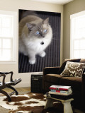 Ragdoll Cat Wall Mural by Savanah Stewart