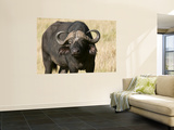 Cape Buffalo, Masai Mara National Reserve, Kenya Wall Mural by Sergio Pitamitz