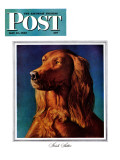 """""""Irish Setter,"""" Saturday Evening Post Cover, May 15, 1943 Giclee Print by Rutherford Boyd"""
