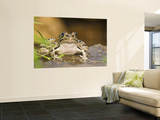 Leopard Frog Sunning By Pond, Central Texas, USA Wall Mural by Larry Ditto