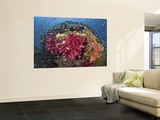 Colorful Corals on Reef, Raja Ampat, Papua, Indonesia Mural Premium por  Jones-Shimlock