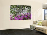 Azaleas and Live Oak Trees Draped in Spanish Moss, Middleton Place Plantation, South Carolina, USA Wall Mural by Adam Jones