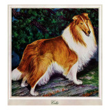 """Collie,"" September 11, 1943 Giclee Print by Rutherford Boyd"